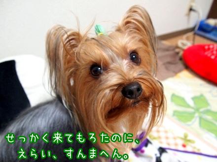 1_20091229191706.jpg