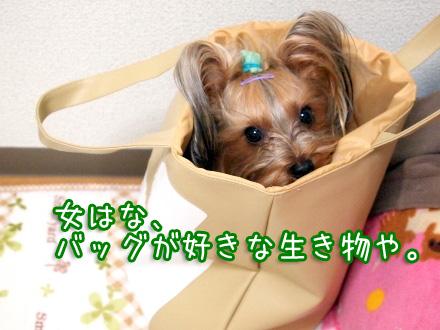1_20100115192544.jpg
