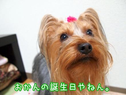 1_20100121195532.jpg