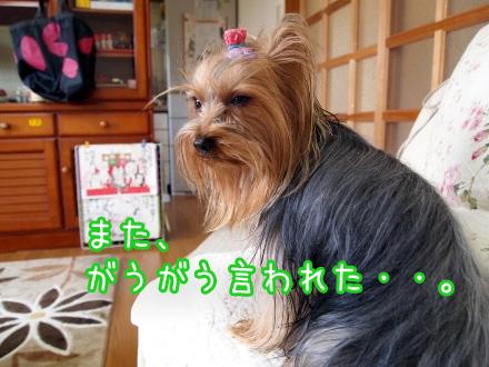 2_20100107172203.jpg
