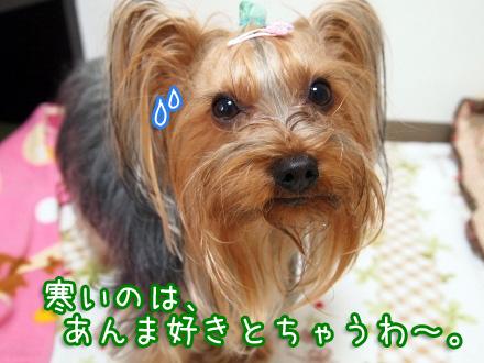 2_20100113141400.jpg