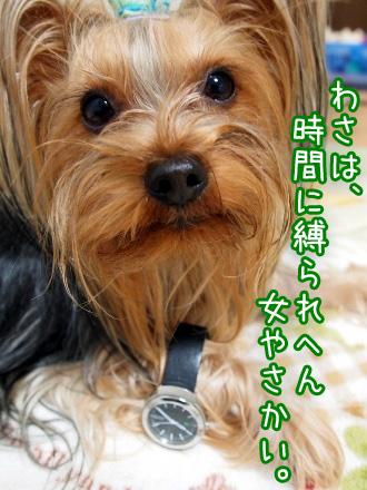 2_20100114174747.jpg