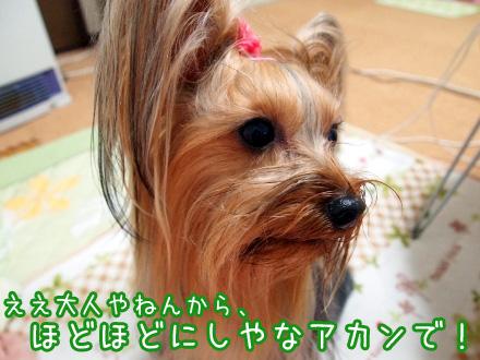 2_20100124192612.jpg