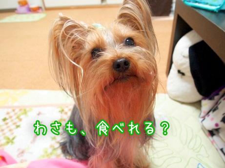 2_20100204161156.jpg