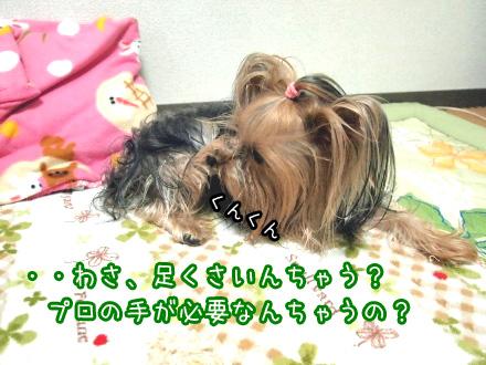 3_20091226174148.jpg