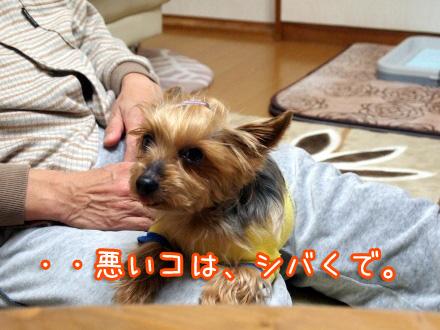 3_20091230201035.jpg