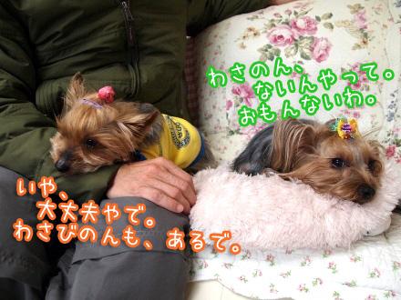 3_20100102123046.jpg