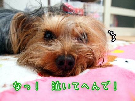 3_20100106121135.jpg