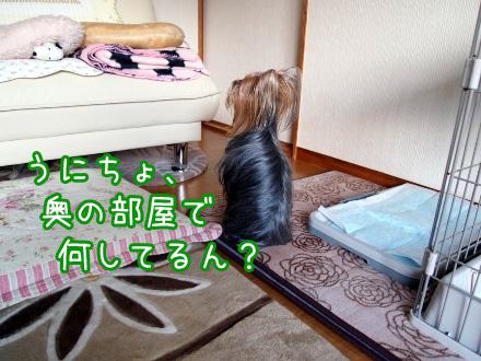3_20100107172203.jpg