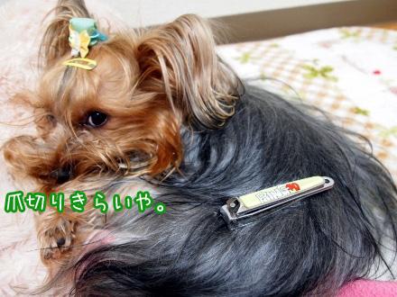 3_20100120194300.jpg