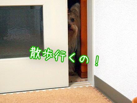 3_20100128170513.jpg