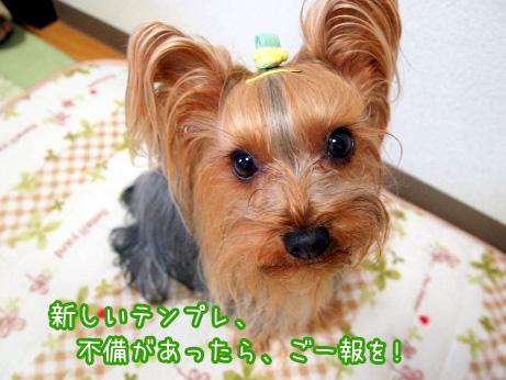 3_20100202203442.jpg