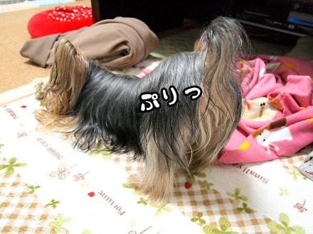4_20091222184356.jpg