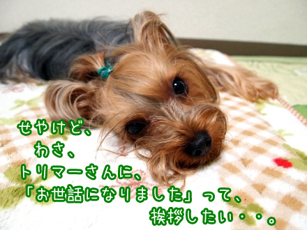 4_20091226174148.jpg