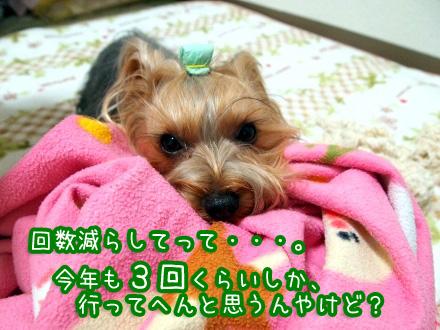 4_20091228184133.jpg