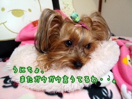 4_20091231162224.jpg