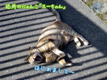 4_20100104151346.jpg