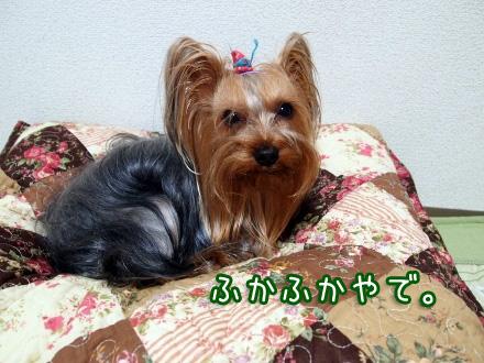 4_20100109191931.jpg