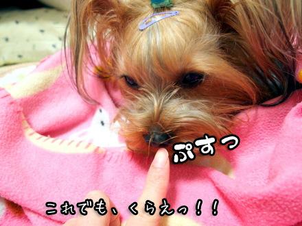 4_20100111180407.jpg