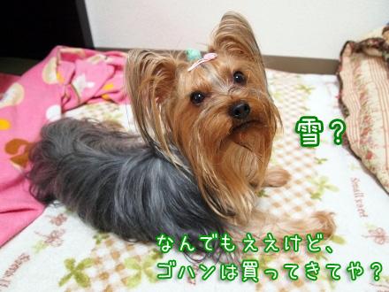 4_20100113141400.jpg