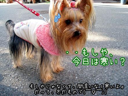 4_20100129171632.jpg