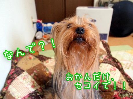 4_20100204161155.jpg