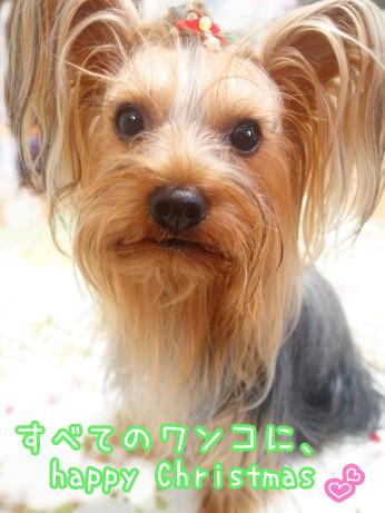 5_20091224180757.jpg