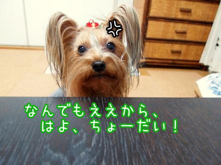 5_20091225185326.jpg