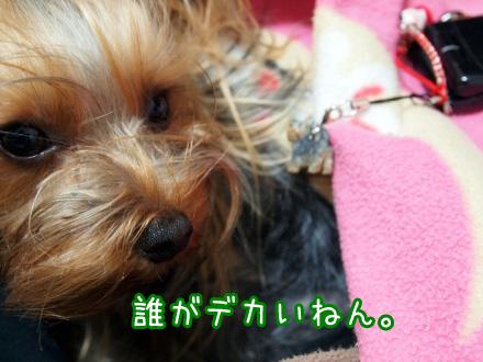 5_20091227194303.jpg
