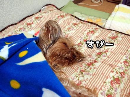 5_20100109191931.jpg