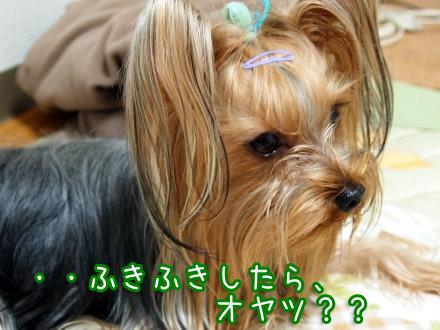 5_20100114174746.jpg