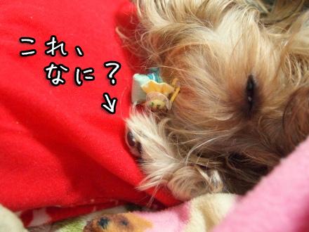 5_20100120194300.jpg
