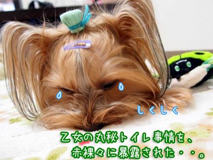 6_20100114174746.jpg