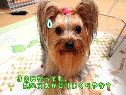6_20100124192611.jpg