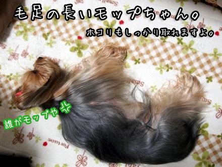 6_20100125173353.jpg
