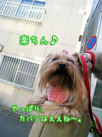 6_20100129171632.jpg