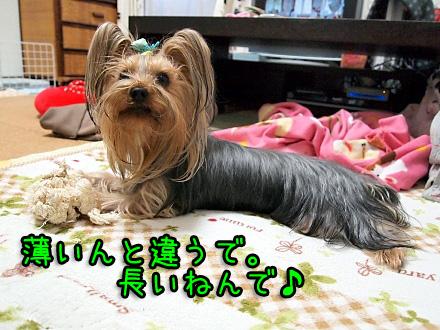 8_20091222184410.jpg