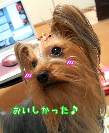 8_20091225185341.jpg
