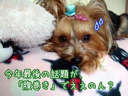 8_20091231162234.jpg