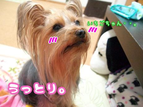 8_20100204161202.jpg