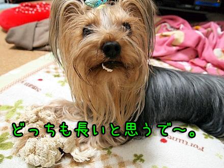 9_20091222184410.jpg