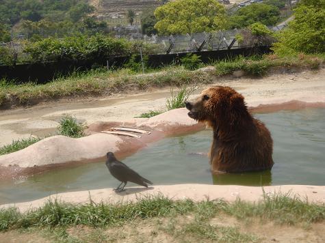 クマの入浴to