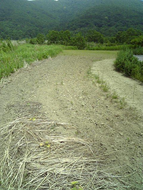 クイタ畑1