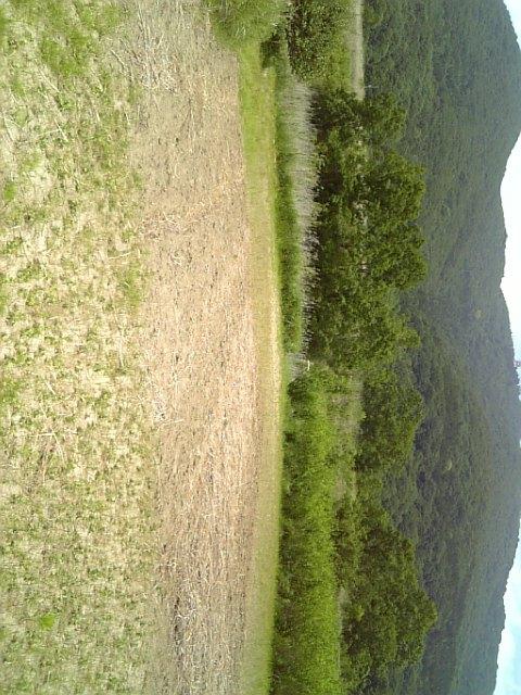 クイタ畑2