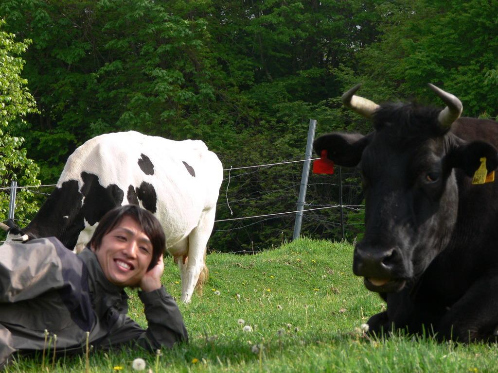 shirou and cows