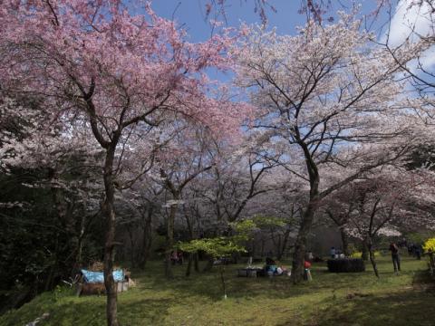 最明寺史跡公園1