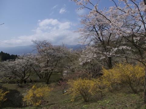 最明寺史跡公園2