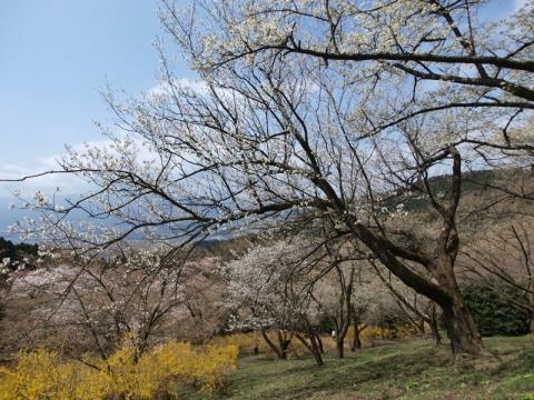 最明寺史跡公園3
