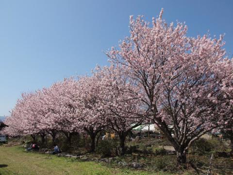 ふくざわ公園ー春めき