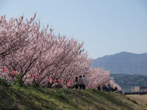 春木径 春めき